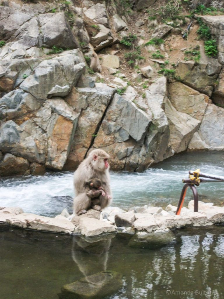 Snow monkey parc Yudanaka