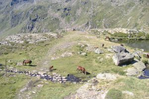 Grazende paarden in Andorra