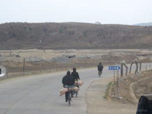 Varkens achterop de fiets